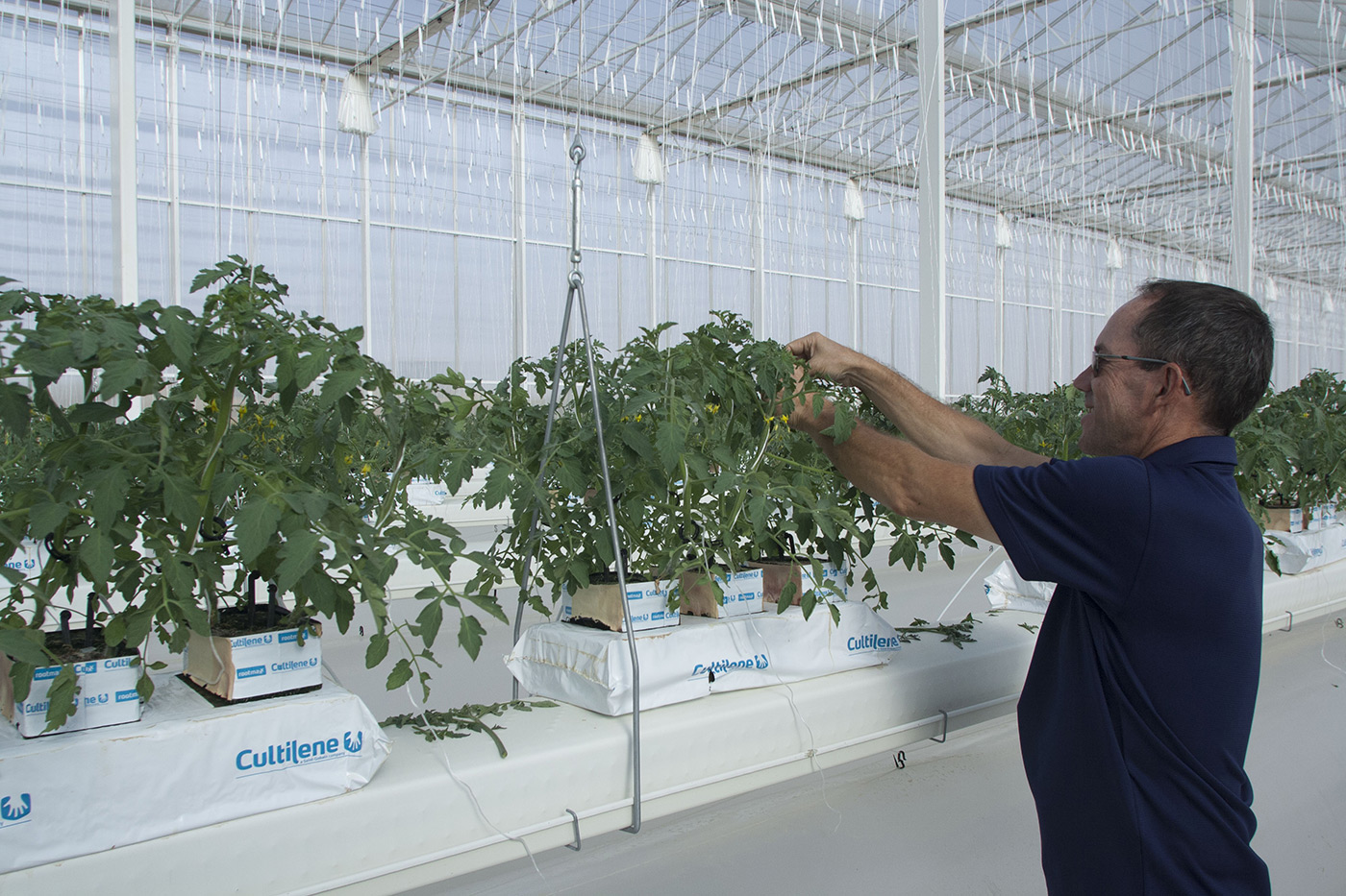 Head Grower Jan Prins at Work