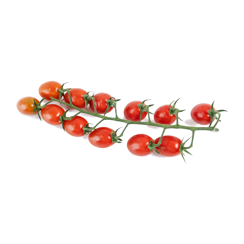Candy Tomatoes on the Vine
